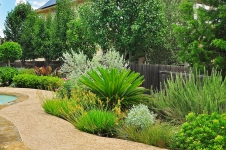 Poolside Native Landscape