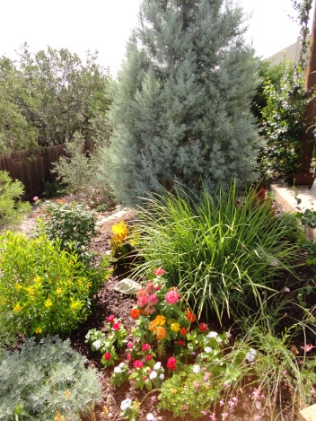 Arizona cypress + perennials