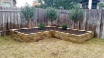 Raised bed evergreen topiaries